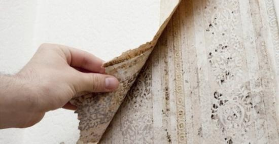 Тщательная очистка стен от зараженных участков