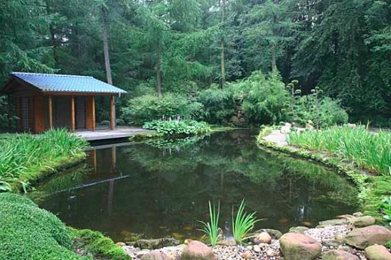 Комфортный пруд