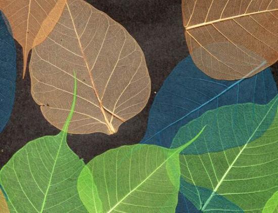naturalnye-oboi-listya